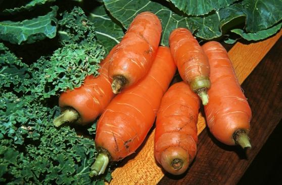 carrot-646108_1920