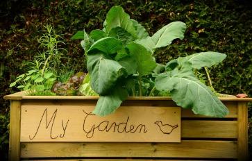 garden-1427541_1920
